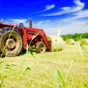 Making hay  by Bryan Gruber - Uncategorized All Uncategorized (  )