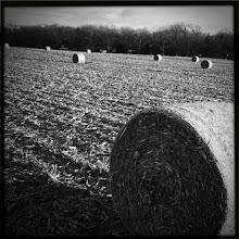 Photo: hay bales, b/w