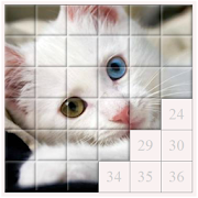 Puzzles and Guess the Breed of Cats
