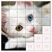 Cats and Kittens - Tile Puzzle