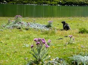 Photo: Lac de Peyreget, 2047m, con marmotta.