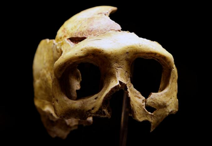 A replica of a Neanderthal skull is displayed in the new Neanderthal Museum in the northern Croatian town of Krapina, Croatia on February 25, 2010. Picture: REUTERS