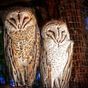 Zoo 2013-246-Edit-Edit-2.JPG