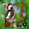 Birdsong Forest icon