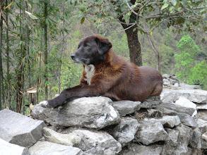 Photo: Dog in Tikhedhunga