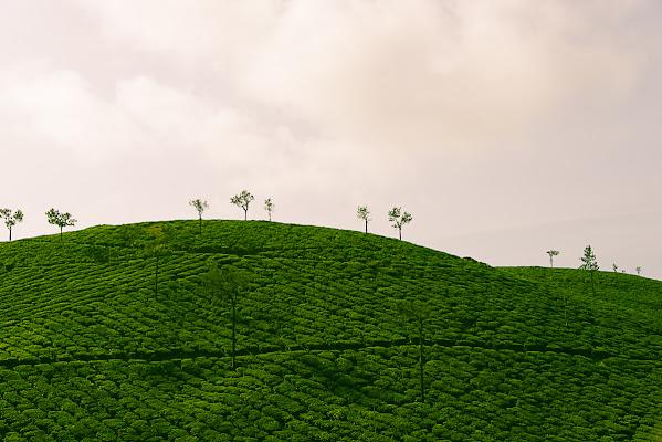 Green Hill di Olaf
