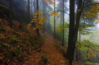 Photo: This one I love specially ;)  #landscapephotography curated by +Margaret Tompkins, +Ke Zeng, +David Heath Williamsand +paul t beard +10000 PHOTOGRAPHERS around the World #1000photographersaroundtheworld by +Robert SKREINER and +Walter Soestbergen #photoplusextract by +Jarek Klimek  +HQSP Landscape #hqsplandscape   #germany  #saxony  #saxonswitzerland  #autumn