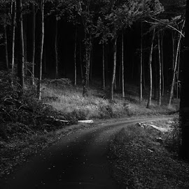 Autumn Journey XXVII.(BW) by Zsolt Zsigmond - Black & White Landscapes ( forest, road, nature, dark, low key, black and white, trees )