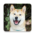 Puppy Sliding Puzzle icon