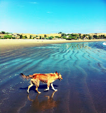 Photo: Not really a stray anymore since she's been adopted, but this is Rita, at Muelle Viejo, Los Organos, Peru.  June 2012.  Rita loves to run on the beach, going on walks with us.
