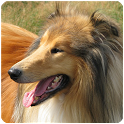 Dog Sounds for Dog icon