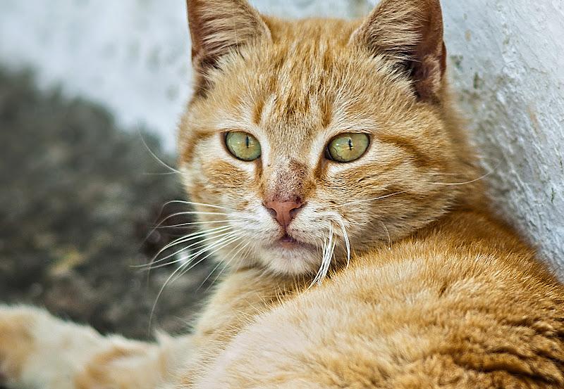 Red cat di Pinco_Pallino