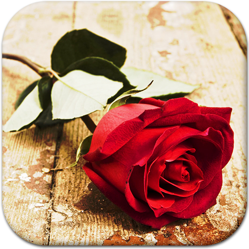 Red Rose Live Wallpaper Icon