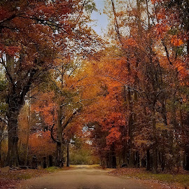 A fall drive by Sue Delia - City,  Street & Park  Street Scenes ( autumn, colors, fall, street, road,  )