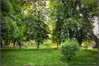 Photo: Castan sălbatic (Aesculus hippocastanum) - Turda, Parcul Central - 2019.05.16