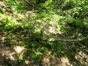 三蛇ヶ滝分岐(右へ)