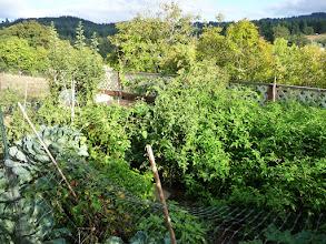Photo: the Veggie Garden in summer's bounty