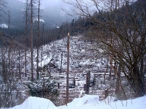 Photo: Po drodze , widok powalonych drzew budzi smutek .