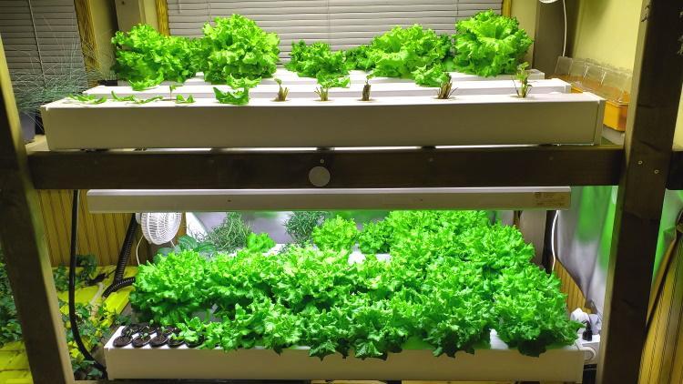 plants in a hydroponic garden
