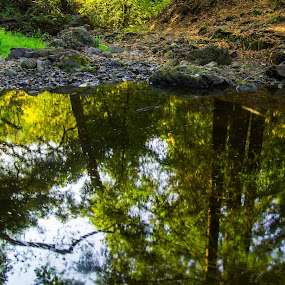 forest reflection by Mehdi Laraqui - Landscapes Waterscapes ( water, reflection, nature, drops, trees, forest, motion, autumn., rocks )