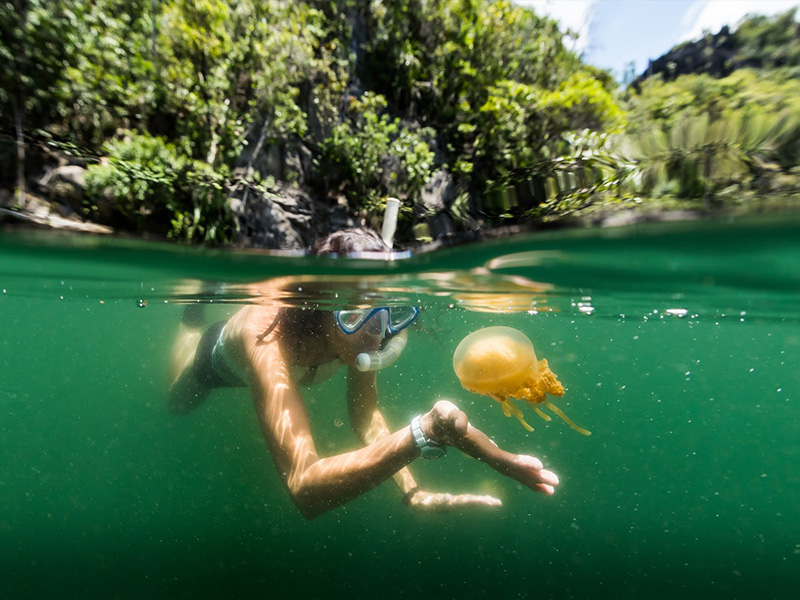 jellyfish in Kalimantan