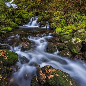 Autumn Kroparica II by Bor Rojnik - Landscapes Waterscapes ( autumn leaves, autumn, creek, jamnik, long exposure, places, leaves, kroparca )