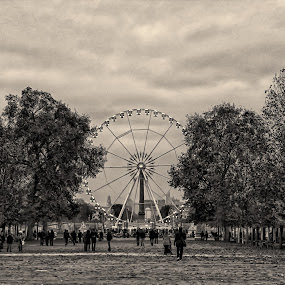 Autumn by Wira Suryawan - Black & White Landscapes ( amazing, paris, cold, autumn, falling, yellow, leaves,  )