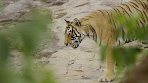 Rana: Queen of the Jungle thumbnail
