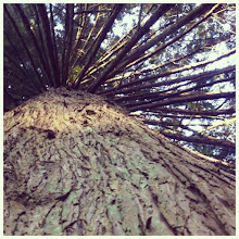 Photo: Look up tree #tree #branch #intercer #nature #green #leaf #leaves #trees #forest #wood #woods #beautiful #life #living #scenary #instanature - via Instagram, http://instagr.am/p/M7fZ_hJfjo/