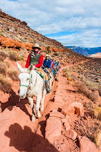 Photo: Mules taking the South Kaibab Trail down the South Rim of Grand Canyon National Park, Arizona, USA