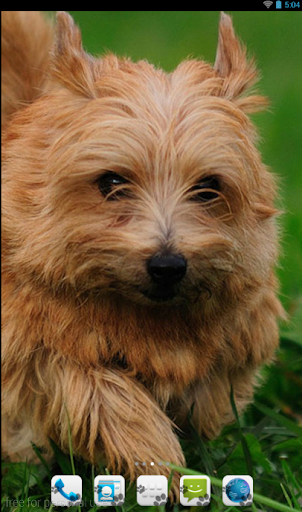Norfolk Terrier Theme Nova ADW