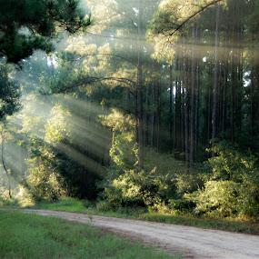 Morning Rays by Jan Davis - Landscapes Travel (  )