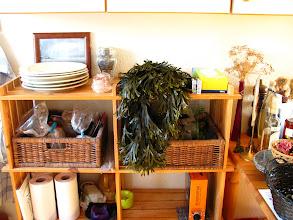 Photo: Jeg selv har her Langfrugtet klørtang til tørre der endnu står på sin sten. Den fandt sig en tørreplads i køkkenet.