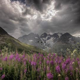 Pleins feux sur les fleurs ! by Sylvie Pierrat - Landscapes Mountains & Hills ( ciel, fleurs, alpes, montagne, orage, lumière, glacier,  )