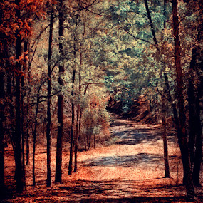 to grandmother's house by Ruby Del Angel - Landscapes Travel ( fairy tale, nature, path, trees, road, landscape, leaves )