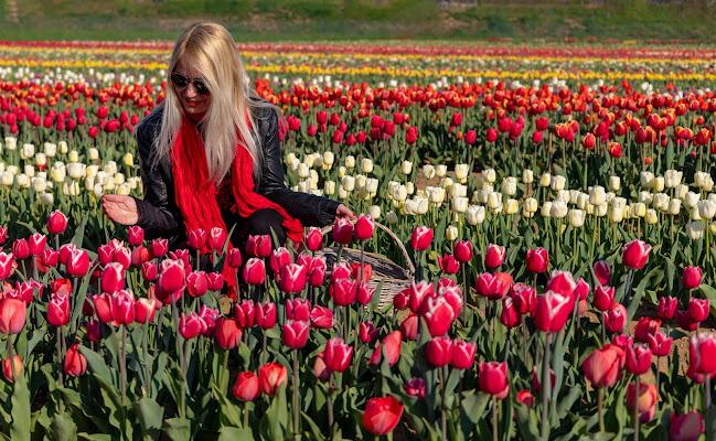 Raccogliendo tulipani di Aktarus
