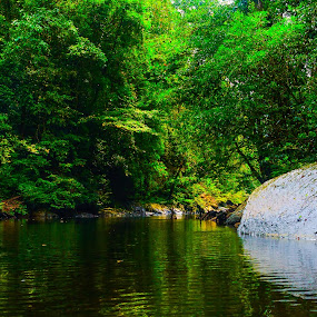 Temburong National Park by David Cheok - Landscapes Forests ( david cheok, temburong, brunei, pristine, rainforest,  )
