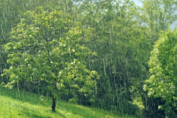 Lacrime di Primavera di Marta231091