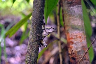 Photo: Rana piccolissima