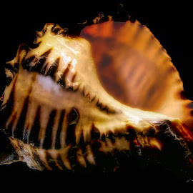 Water Saturated Sea Shell by Dave Walters - Nature Up Close Other Natural Objects ( macro, nature, lumix fz2500, colors, sea shell )