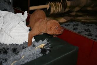 Photo: Rosa lyckades ta sig ur valplådan först.