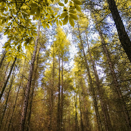 The Golden hour inside a wood. by Sam Kirimli - Landscapes Forests