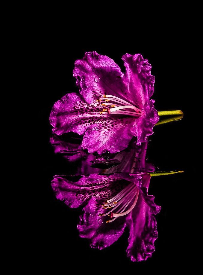 Fiore di azalea di Maria Luisa Zoccolini