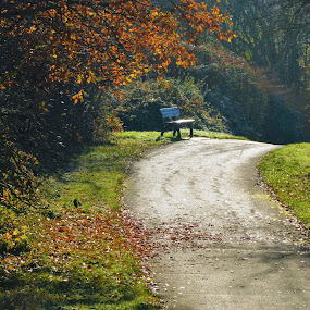 The autumn and a bench in a park at sunny day by Svetlana Saenkova - City,  Street & Park  City Parks ( path, bench, autumn colours, autumn leaves, autumn, sunny,  )