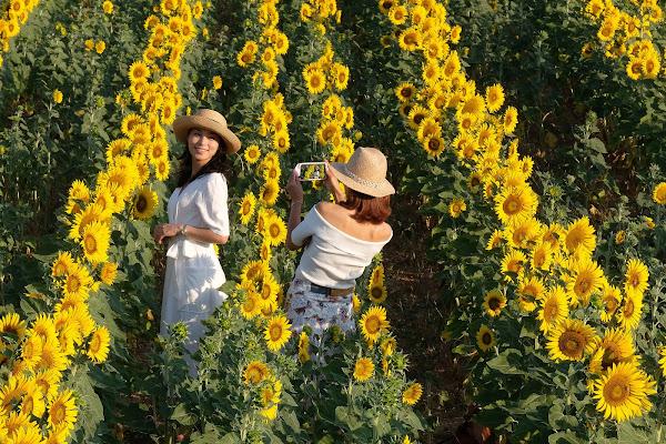 Flowers and sunflowers di tonino_de_rubeis