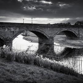 Annan Bridge by James Johnstone - Black & White Landscapes ( black & white, flowers, annan, river, bridge, daffodils )