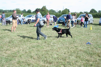 Photo: DogBasics Fun Day 2013 - Munish and Dicer Lab in the Contact Slalom