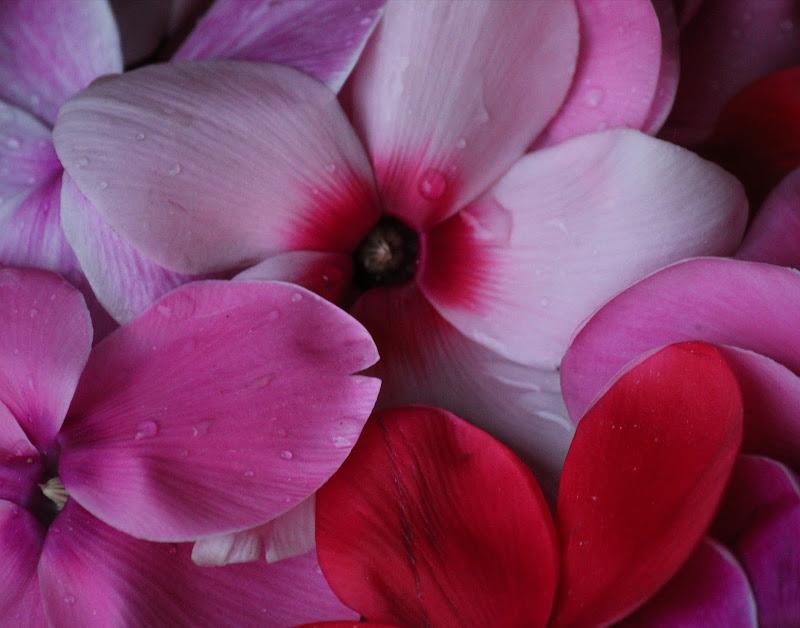 Un fiore di MarcoQuarta