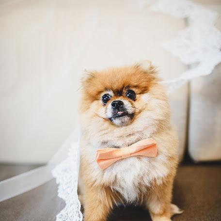 Wedding photographer Elya Minikhanova (elkinofoto). Photo of 04.09.2017