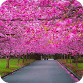 Spring Scenery Wallpaper